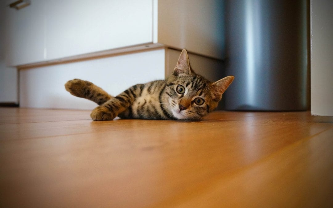 5 Ways To Change Your Cat's Scratching Behavior