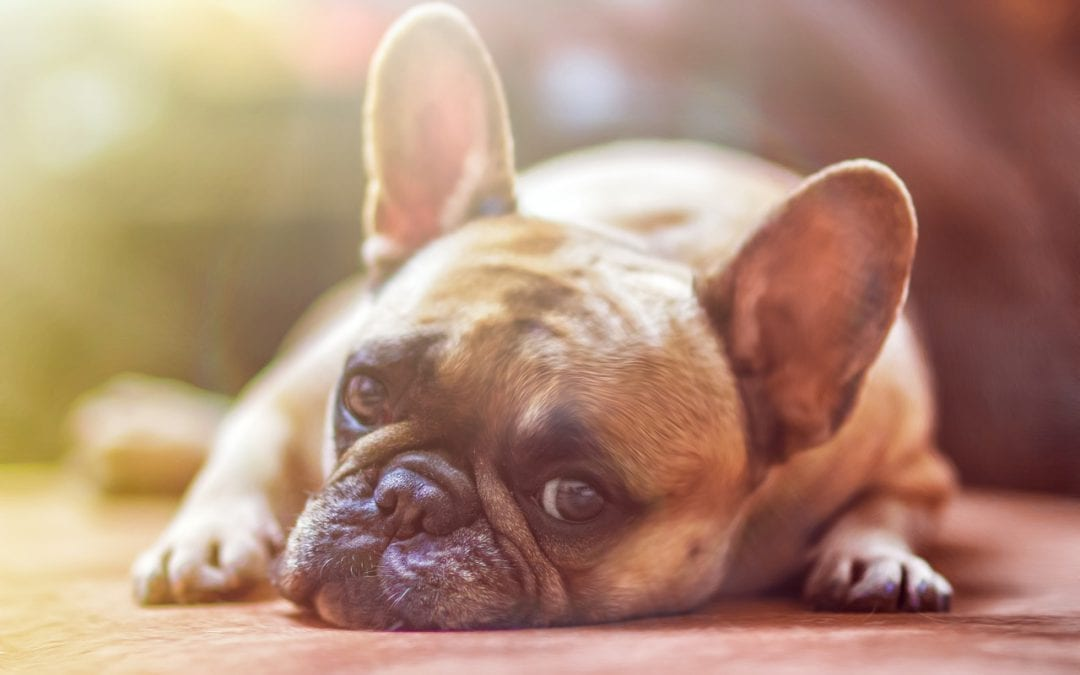 How To Protect Your Dog From Parvovirus