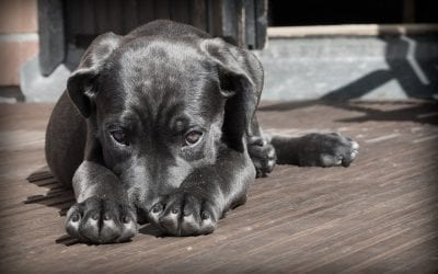 Protect Your Pet: Heartworm Disease