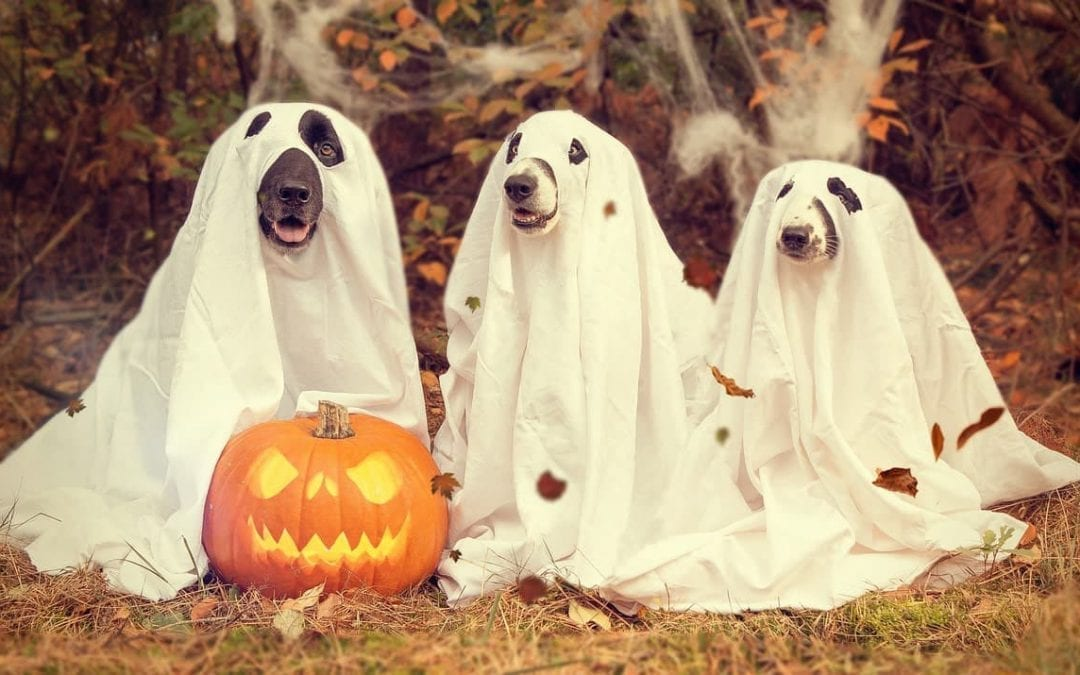Top 5 Halloween Horrors Pet Owners Should Avoid