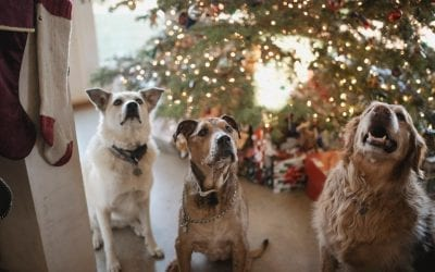 Holiday Tips For Your Furry Friends