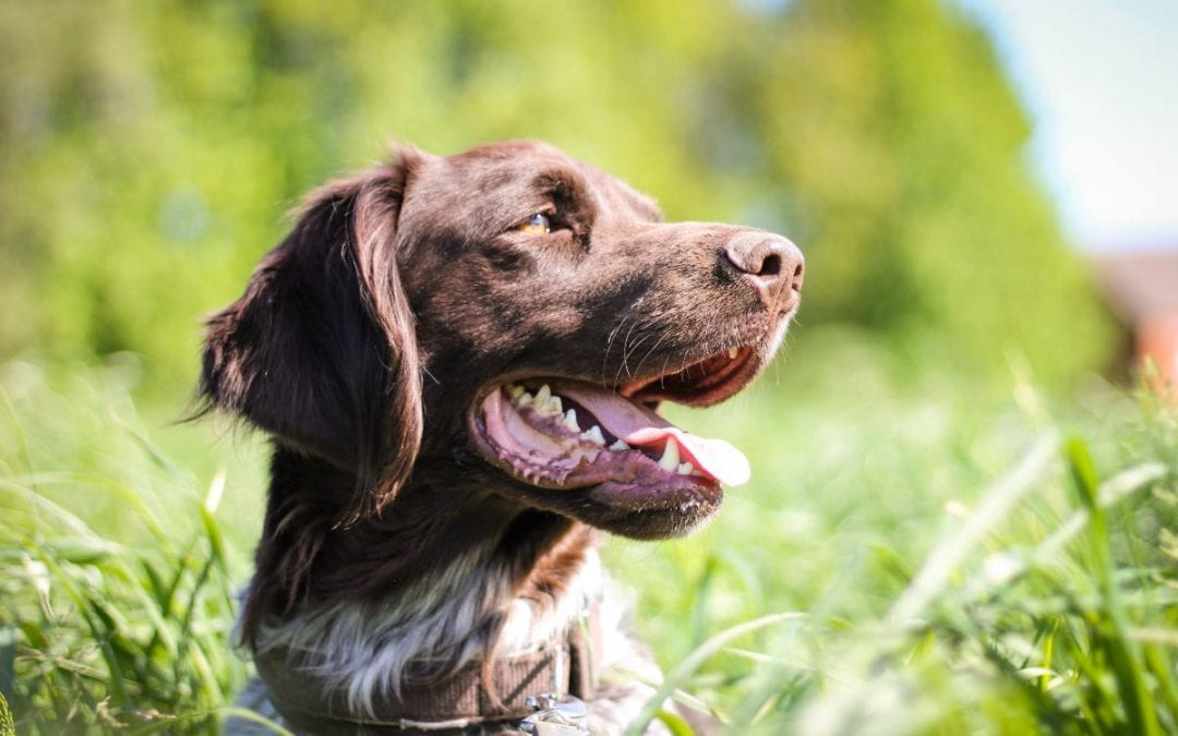 Garden Toxins To Keep Away From Your Pet