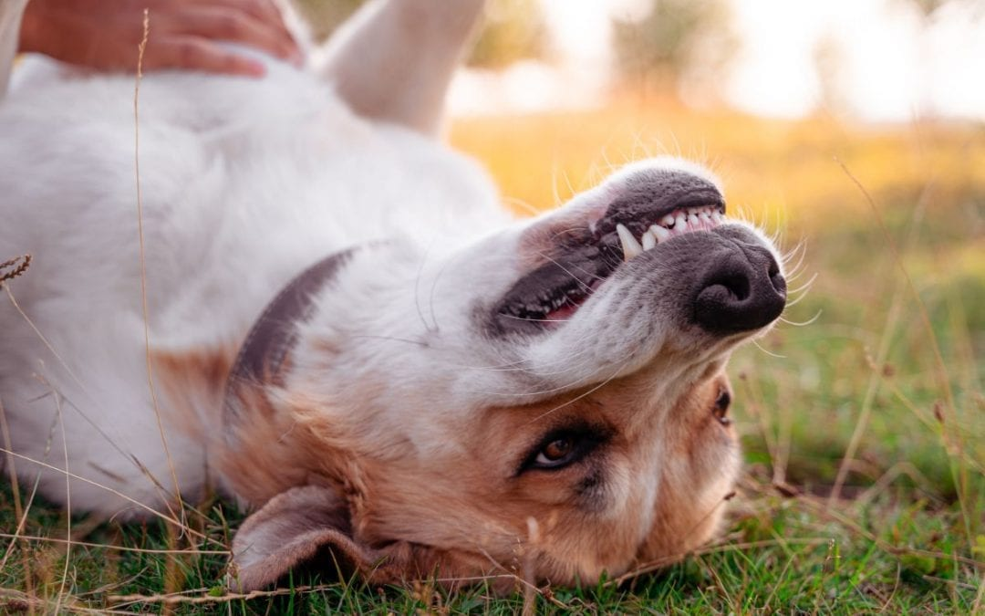 Tips On Brushing Your Pet's Teeth