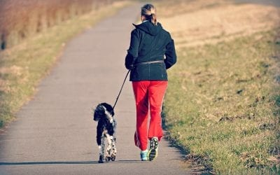 Walk Your Dog More In The New Year